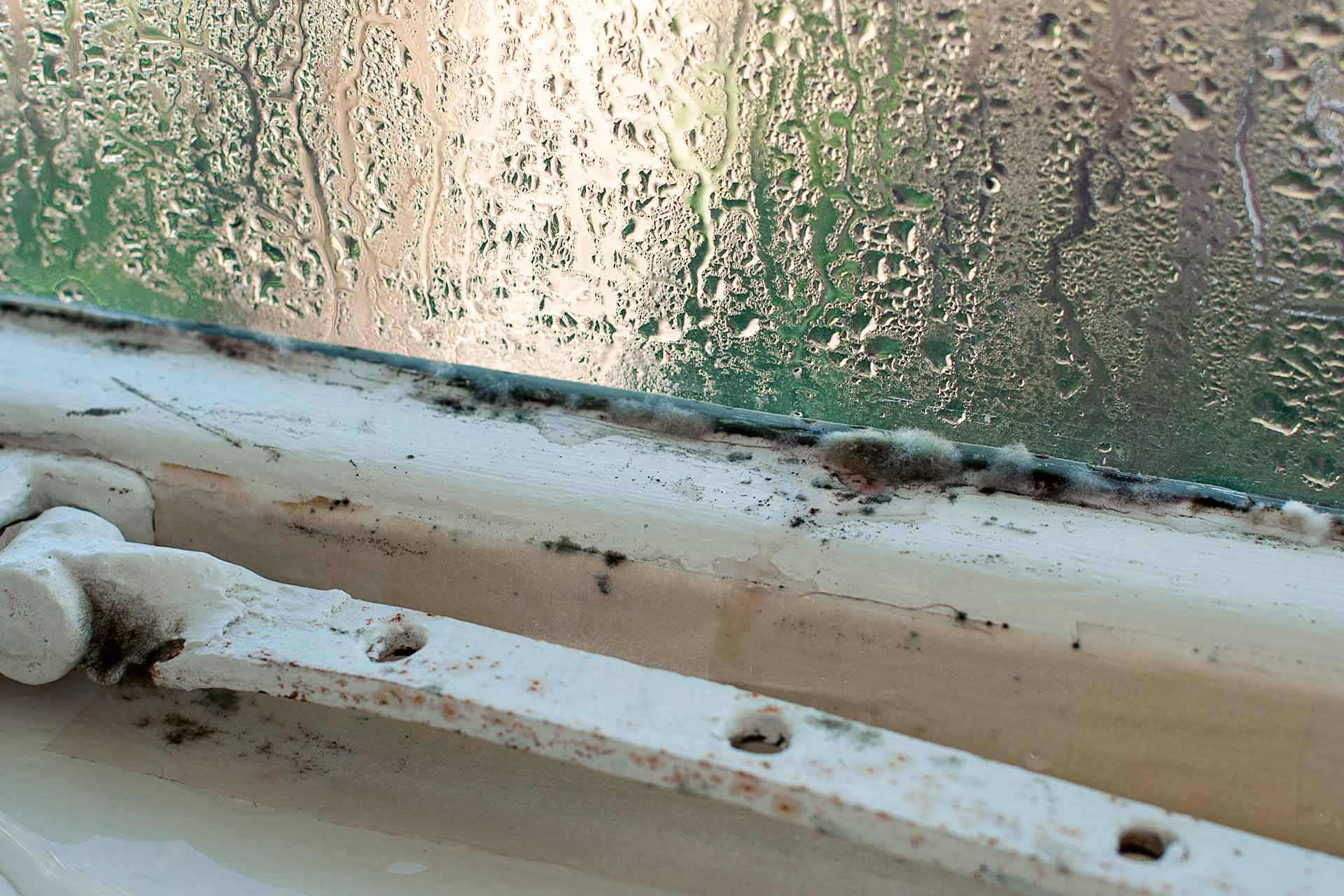 Dangers of Mould on your Windows